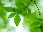 NaturePhotoCollection